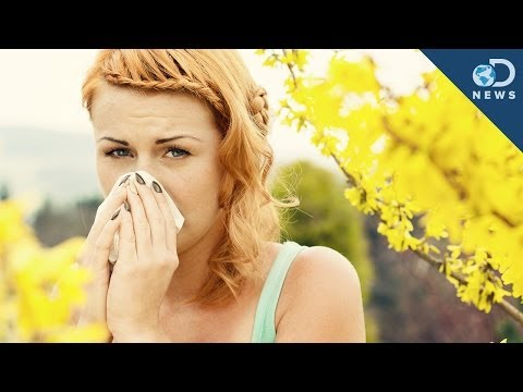 Why Do We Get Allergic reactions?