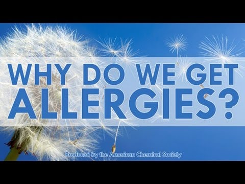 Why Do We Get Allergies? – Reactions