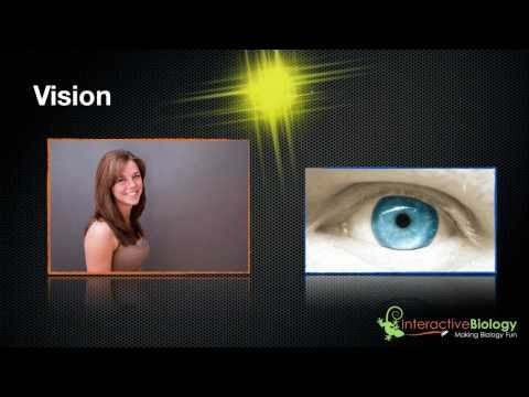 030 How Eyes Function – An Introduction